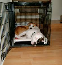 Unchewable Dog Bed by Pit Bull Dog Beds Kuranda Dog Beds