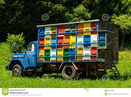 Colorfull And Vibrant Bee Hives On Old Truck In Slovenia Stock Photo ... Arnia Hive Monitors On Twitter Apimondia2017 Tech Tour Bee Lorry Bee Busters Truck Moving Bees Is Not Easy Slide Ridge Notes Video Driver Cited In Truck Crash 6abccom Brown Cat Bakery Transport Meet The Biobee Youtube Why Are So Many Trucks Tipping Over The Awl 14 Million Spilled I5 Everybodys Been Stung Honeybees Travel 1000 Miles To Pollinate Nations Crops Bbj Today 2018 Hino 817 4x4 Flat Deck
