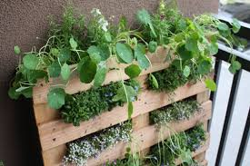 DIY Small Space Pallet Garden