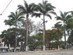 imagem de Caputira Minas Gerais n-7