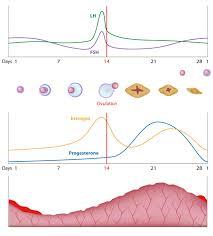 Uterus Lining Shedding Without Blood by Autoimmune Disease U2013 Is Endometriosis One Of Them Wellness