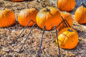 Pumpkin Farm Maryland Heights Mo by Mecca Family Farms U0027 Pumpkin Patch Our Eyes Upon Missouri