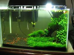 158 best nano freshwater images on aquarium ideas