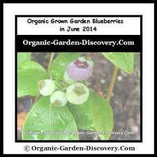 Organic Gardening Magazine for Fruits