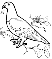 Beautiful Dove Coloring Pages