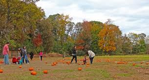 Pumpkin Picking Nj Near Staten Island by Pumpkin Picking At The Decker Farm