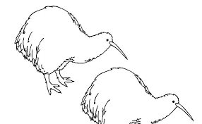 Kiwi Bird Twin Coloring Pages PagesFull Size Image