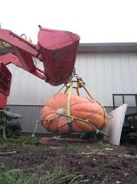 Morton Pumpkin Festival Hours by A Very Big Pumpkin The Source