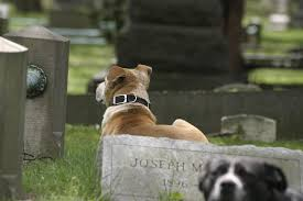 Want To Be Buried With Your Pet? In N.J., It's Complicated | NJ.com Its Going To Weird Some People Out A New Company Will Compost How Do I Keep My Backyard Free Of Murdered Possums Vermin Amazoncom 100 Wireless Pet Coainment System Wifi Radio Dog 39 Best Dealing With Loss Images On Pinterest Loss Man Admits Shooting And Burying Dog In Westside Jacksonville Bunny Rabbit Chases Around The Yard Youtube Backyard Playground Ideas For Your What Do Your Pets Remains After Death Where Bury Dead Pets Or Animals Bengaluru Citizen Matters Burying 2 Monthsold Bunny Doggie Solution Dogs Ideas