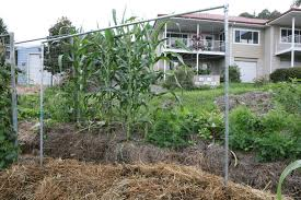Inspirations: Cucumbers Trellises With Bamboo Material And Plants ... Backyards Modern High Resolution Image Hall Design Backyard Invigorating Black Lava Rock Plus Gallery In Landscaping Home Daves Landscape Services Decor Tips With Flagstone Pavers And Flower Design Suggestsmagic For Depot Ideas Deer Fencing Lowes 17733 Inspiring Photo Album Unique Eager Decorate Awesome Cheap Hot Exterior Small Gardens The Garden Ipirations Cool Landscaping Ideas For Small Gardens Archives Seg2011com