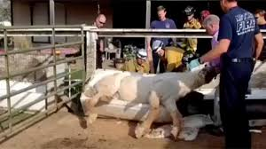 Horse Water Trough Bathtub by Dancing Horse