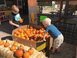 Pumpkin Patch Near Chandler Az by 6 Reasons To Visit Vertuccio Farms This Fall Things To Do In