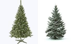 Christmas Trees Types by Modest Design Christmas Trees Real Shop All Types Of The Home