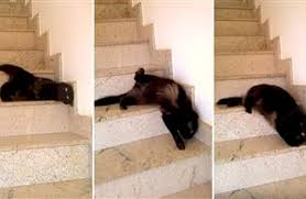 cat stairs snake cat slithers the stairs in mesmerizing