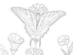 Two Tailed Swallowtail Butterfly Coloring Page From