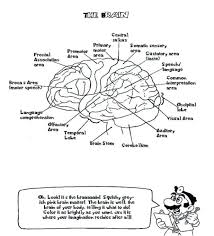 The Human Brain Coloring Book Free Pdf Download Anatomy Pages Facts Printable Diamond