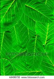 Green Leaf Pile Clipart