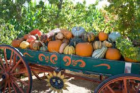 Pumpkin Patch In Yucaipa by Yongnuo Yn 35mm F 2 Lens For Nikon F Mount Quick Review And Test