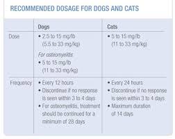 clindamycin for cats antirobe clindamycin hydrochloride zoetis us