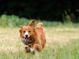 10 healthiest dog breeds petmd