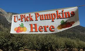 Pumpkin Patch With Petting Zoo Las Vegas by The Pumpkin Factory At Oak Glen Zu Media