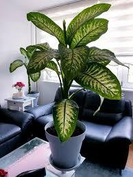 gesunde schöne pflanzen 1 55 grös