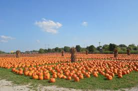Bengtsons Pumpkin Patch Homer Glen Il by Pumpkin Patches To Fall In Love With U2013 Devils U0027 Advocate