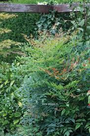 23 Best ✿ Bomen En Struiken Images On Pinterest | Blossom Trees ...
