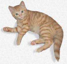 signs of worms in cats intestinal parasites in your cat and what to do about them