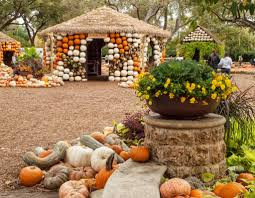Southern Ohio Pumpkin Patches by Autumn At The Arboretum In Dallas Is The Best Pumpkin Patch In Texas