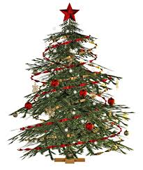 Fresh Christmas Trees Types by Where To Buy Christmas Trees U0026 Decorations In Singapore