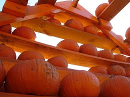 Flower Mound Pumpkin Patch Flower Mound Tx by Best 25 Flower Mound Pumpkin Patch Ideas On Pinterest Garden
