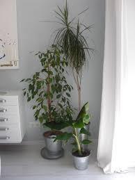 neue pflanzen heim elich