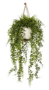 Fake Plants For The Bathroom by Fake Plant U2026 Artificial House Plants Pinterest Fake Plants