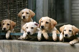 California: Bill Would Limit Pet Store Sales To Rescue Animals Breeding Cception To Birth Three Creek Australian Spherds Latest News New Orleans Louisiana Spca 17 Best Aspca Images On Pinterest Animal Rescue Rights Breeders Backyard And Puppy Mills What Is The Difference Signs Of A Breeder Its Dog Or Nothing Image With Fabulous Puppies Trapped In Dirty Are So Happy To See Their Rescuers Rescuogsfrombreeders Breed Gallery Red Flags Warning When Dealing With A Article Why Adopt Sitas Sanctuary Rescue From Mill Being Sold In Pet Store Puppy Remy Griffon For Love Of Animals