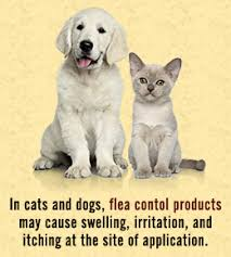 fleas on cats symptoms symptoms of cat fleas