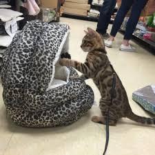 Cat Beds Petco by Petco 38 Photos U0026 91 Reviews Pet Stores 1280 Lexington Ave