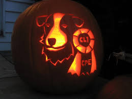 Organic Pumpkin For Dogs Diarrhea by Pumpkins For Pups Is Pumpkin Good For Dogs Rover Blog