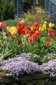 garden ideas bulbs to plant in fall white bulb flowers