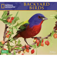 2016 National Geographic Backyard Birds Wall Calendar - National ... National Geographic Backyard Guide To The Birds Of North America Field Manakins Photo Gallery Pictures More From Insects And Spiders Twoinone Bird Feeder Store Birds Society Michigan Mel Baughman Blue Jay Picture Desktop Wallpaper Free Wallpapers Pocket The Backyard Naturalist 2017 Cave Wall Calendar