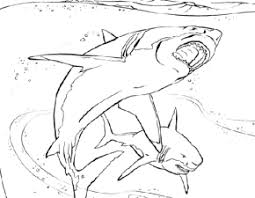 Great White Shark Coloring Page Book