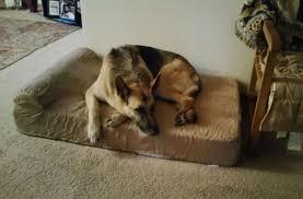 best orthopedic memory foam dog beds reviewed