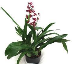 Best Bathroom Pot Plants by Best Plants For The Bathroom Indoor Gardener