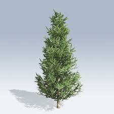 Fraser Fir Christmas Trees by Fraser Fir V6 Speedtree