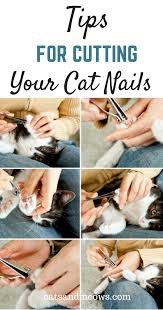 how to cut a cats nails tips for cutting your cat s nails cats and meows