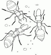 Allegheny Mound Ant Coloring Page Download