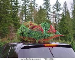 Christmas Tree Baler by Free Evergreen Tree Tops Photos Page 2 511 Avopix Com