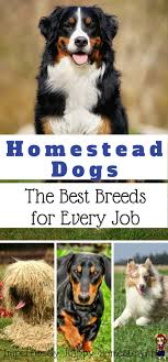 Best 25+ Farm Dogs Ideas On Pinterest | Beagle Puppy, Beagle ... Cloud Nine Dog Traing Best Houses In 2017 For Both Indoor And Outdoor Use Siberian Husky Costs Facts Infographic Ultimate Guide Farmer Tag Wallpapers Country Children Tractor Fields Farm Dogs Plastic Dog Barnhome Kennel Petshop Online 25 Food Bowls Ideas On Pinterest Project Food Cindee X Stackhouse Owyheestar Weimaraners News 614 Best Australian Cattle Images Blue Heelers 5 Facts About Dogs Deworming The Horse Owners Resource Lonely Escapes Yard To Get A Hug From His Friend Youtube Oakwood Park Morton6711