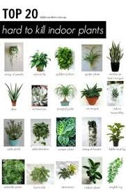 Best Pot Plant For Bathroom by We Look Into The 18 Best Indoor House Plants To Help Purify The