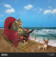 Cat Rocking Chair Image & Photo (Free Trial) | Bigstock Rocking Chair On The Beach Llbean Folding Beach Chair Details About Portable Bpack Seat Camping Hiking Blue Solid Construct Polywood Presidential Pacific 3piece Patio Rocker Set Safavieh Outdoor Collection Alexei House Rocking Porch With Railing Overlooking At Gci Waterside Bay Rum Twitter Theres A Blue Essential Garden Low Back Limited Amazoncom Dixie Seating Mountain Wood Youth Sunset Trading Horizon Slipcovered Box Cushion Swivel Adjustable Lounge Recliners For Lawn Pool I5438